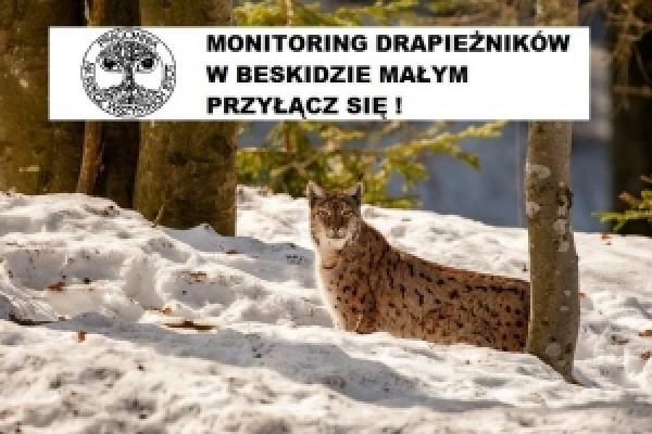 Monitoring dużych drapieżników w Beskidzie Małym