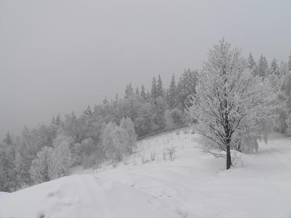 Łysa Przełęcz (Siodło)