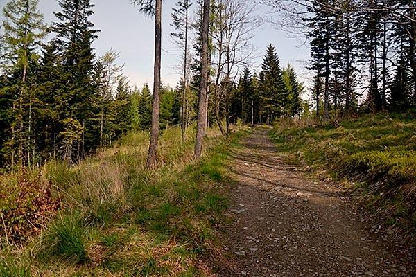 Klikadziesiąt metrów pod szczytem, droga z Przegibka, niebieski szlak  fot. Cyberniok
